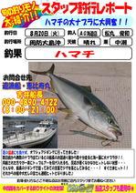 blog-20130820-kaiyuu-hamati.jpg
