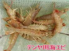 ayumi21.jpg