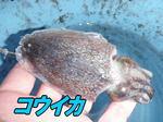 blog-honten-20131025-kudako-4.jpg