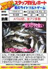 blog-20131120-shinshimo-hata.jpg