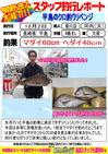 blog-20131202-kikugawa-madai.jpg
