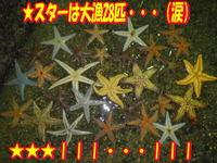 blog-20131226-koyaura-karei2.jpg