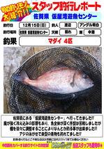 photo-blog-20131215-wajiro-madai.jpg