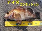 blog-2014 3 24.honten  kyoura muba  jpg.jpg