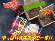 blog-20140319-kurahashiikada-karei1.jpg
