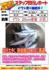 blog-20140411-shinshimo-hata.jpg