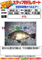 blog-20140413-honten-hiraisi mebaru.jpg