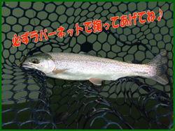 blog-20140418-ooshimaten-t4.jpg