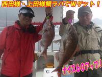 blog-20140611-ooshimaoki-madai-yuuyuu10.jpg
