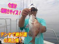 blog-20140611-ooshimaoki-madai-yuuyuu16.jpg