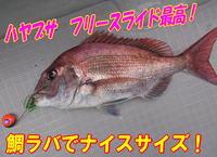 blog-20140611-ooshimaoki-madai-yuuyuu2.jpg