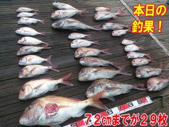 blog-20140611-ooshimaoki-madai-yuuyuu22.jpg