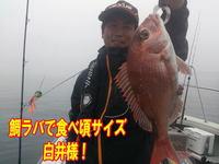 blog-20140611-ooshimaoki-madai-yuuyuu6.jpg