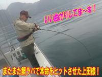 blog-20140611-ooshimaoki-madai-yuuyuu8.jpg