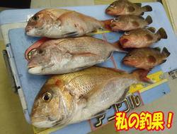 blog-20140708-nakayoshimaru-akou&madai4.jpg