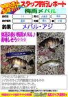 blog-20140709-ooshimaten-01.jpg