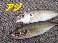 blog-2014 9 24 misaki-11.jpg