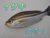blog-2014 9 24 misaki-12.jpg