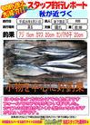 blog-20140821-shinshimo-hata.jpg
