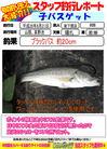 blog-20140821-shinshimo-hata2.jpg