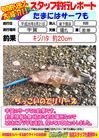 blog-20140821-shinshimo-hata3.jpg