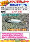 blog-20140821-shinshimo-hata4.jpg