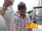 blog-20140827-ayumimaru-madai15.jpg