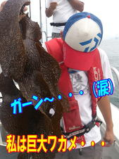 blog-20140827-ayumimaru-madai6.jpg