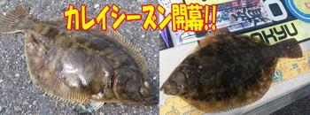 blog-20141009-kokudou31-karei1.jpg
