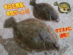 blog-20141127-koyaura-karei1.jpg
