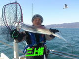 blog-20150113-kamagarioki-tachiuo4.jpg