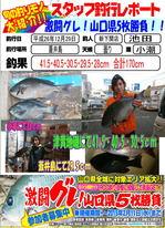 news-20141229-sinsimo-da-bi-.jpg