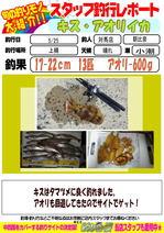 blog-20150527-tsushima-asahina.jpg