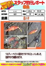 blog-20150616-tsushima-asahina.jpg