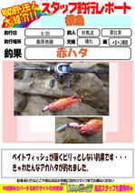 blog-20150820-tsushima-asahina.jpg