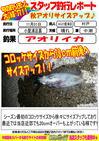 釣行レポート アオリイカ 2015.11.01.jpg