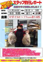 blog-20151120-kikugawa-madai.jpg