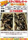 blog-2016-03-09-koyaura-hunemebaru2.jpg