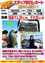 blog-20160302-sinsimo-ikeda.jpg