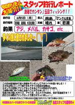 blog-20170605-hikoshima-aji.jpg