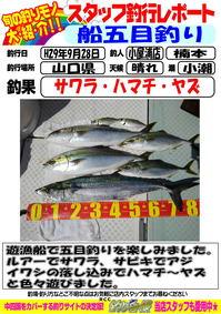 2017 9 28 sawara.jpg