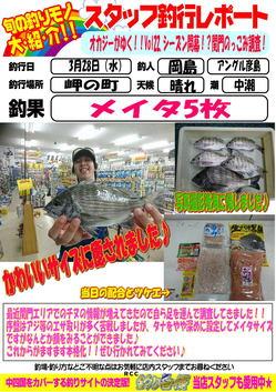 blog-20180328-hikoshima-tinu.jpg