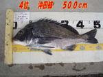 news-20131203-honten-4kositasama.jpg