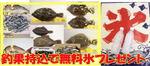 news-20140113-kaiyuu-koori.jpg