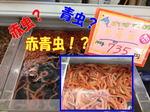 news-20140118-ooshimaten-a1.jpg