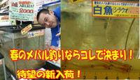 new20140307shirauo.jpg