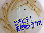 news-20140322-ooshimaten-es.jpg