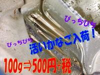 news-20140326-ooshimaten-ikanago.jpg