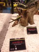 news-20170205-koyaura-imakatu2.JPG