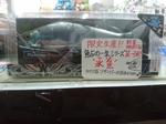 ガンクラ_0718.JPG